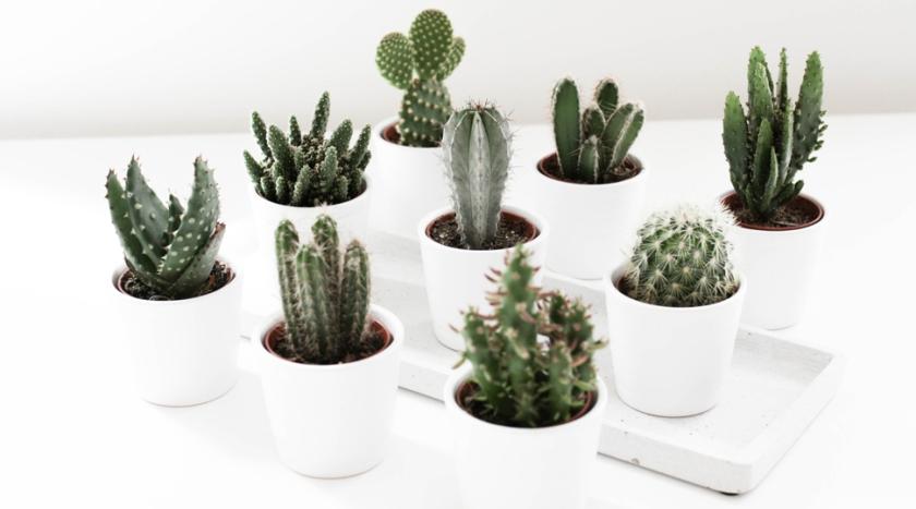 -noa-noir-art-interior-home-decor-cactus-cacti-succulents-green-mini-plants-minimalistic-0